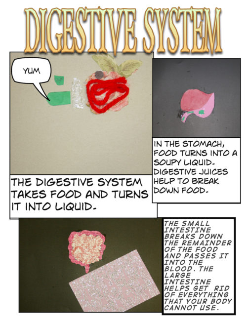 digestive systems[1]